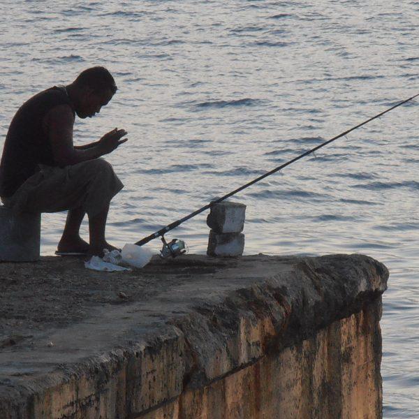 Heartless Angler Photo: Sarang @WikimediaCommons