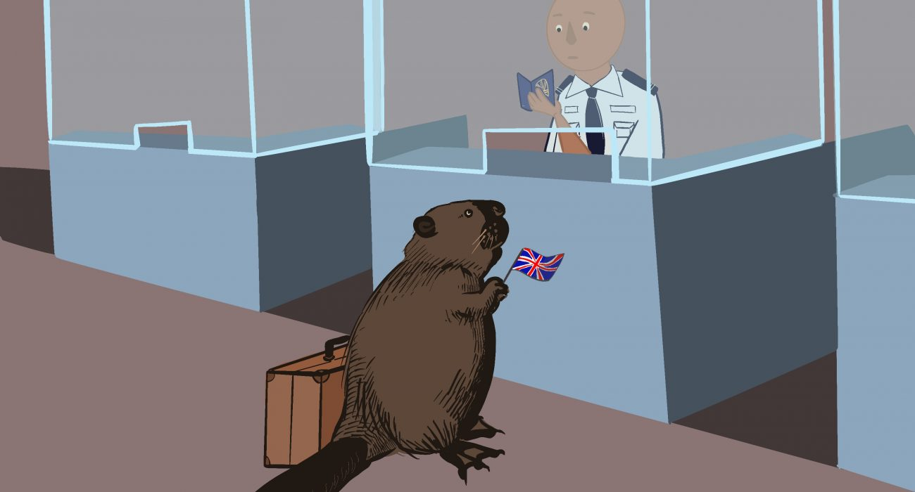 Beavers are back in the UK