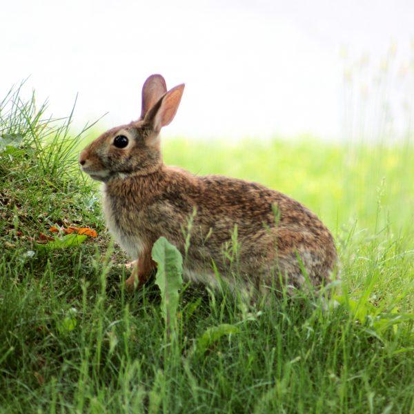 Bunny. Photo: Memotions@Flickr