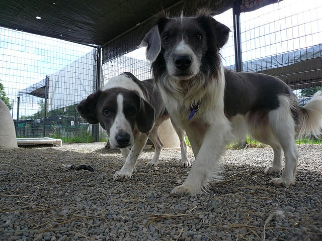 Manchester Council's dog home task force is set to quickly rehome the loveable animals. Photo: JBSibley @Flickr