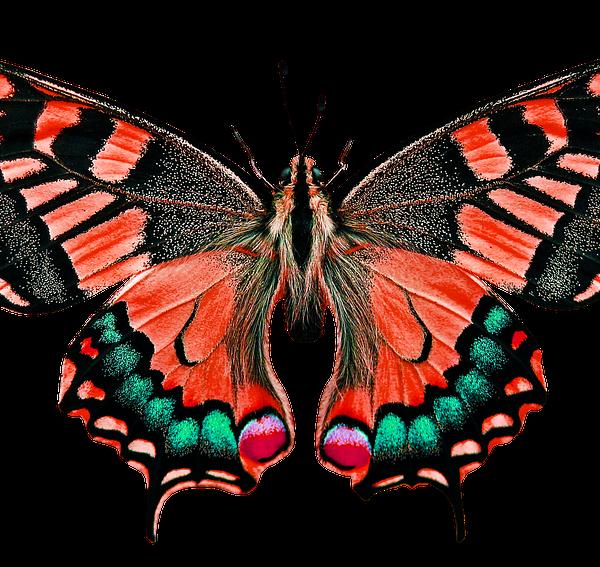 Photo: @Pixabay