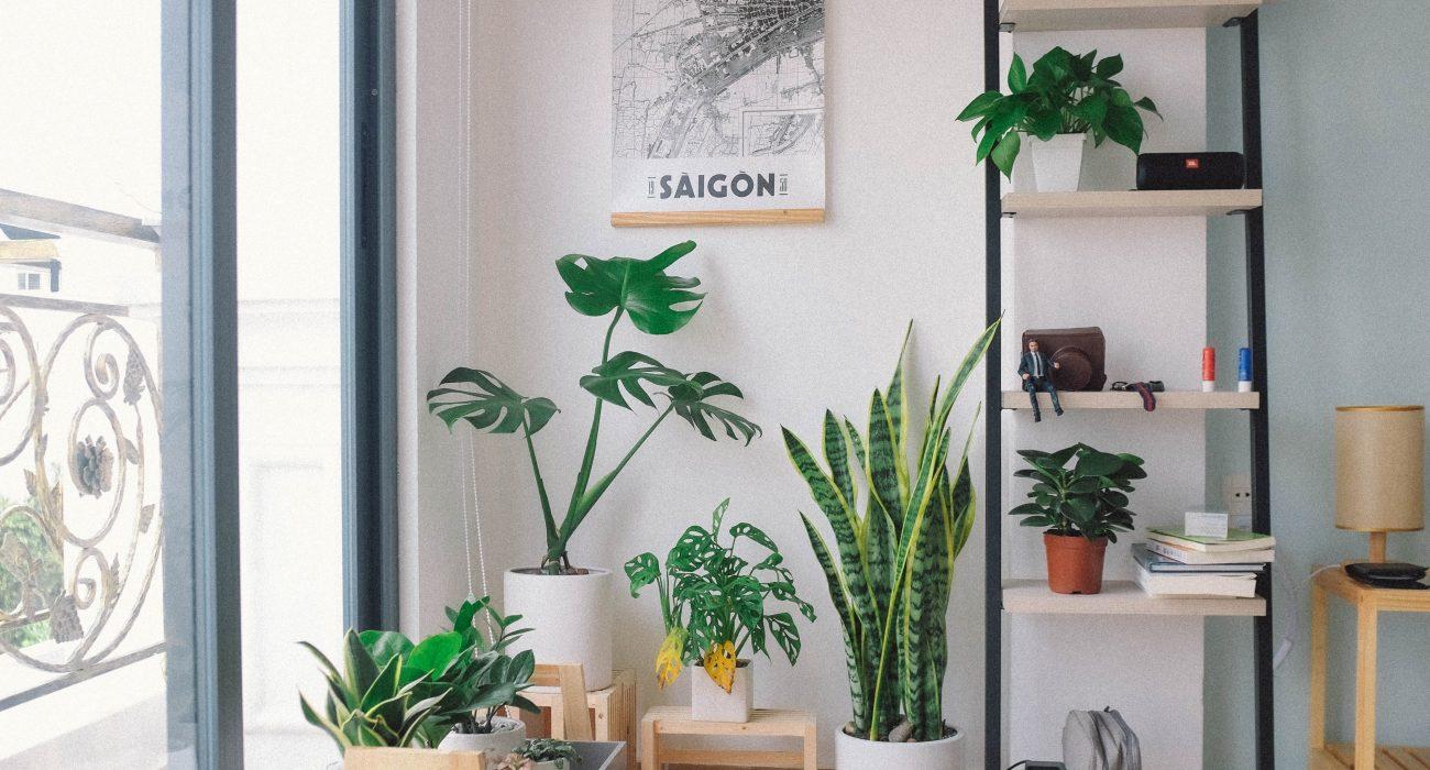 Plants Photo: Huy Phan @Unsplash