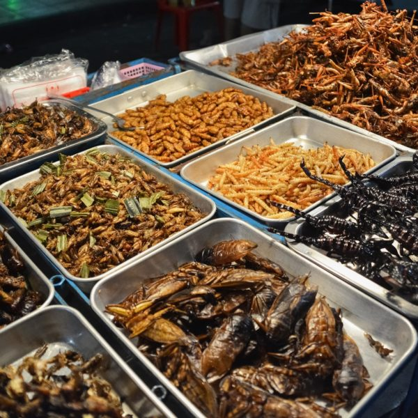 edible insects