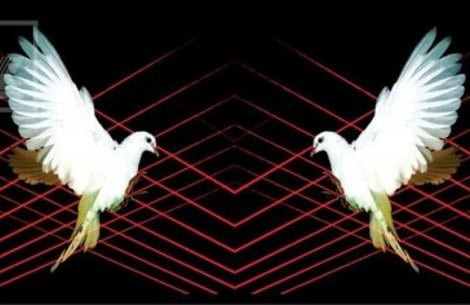 whp doves